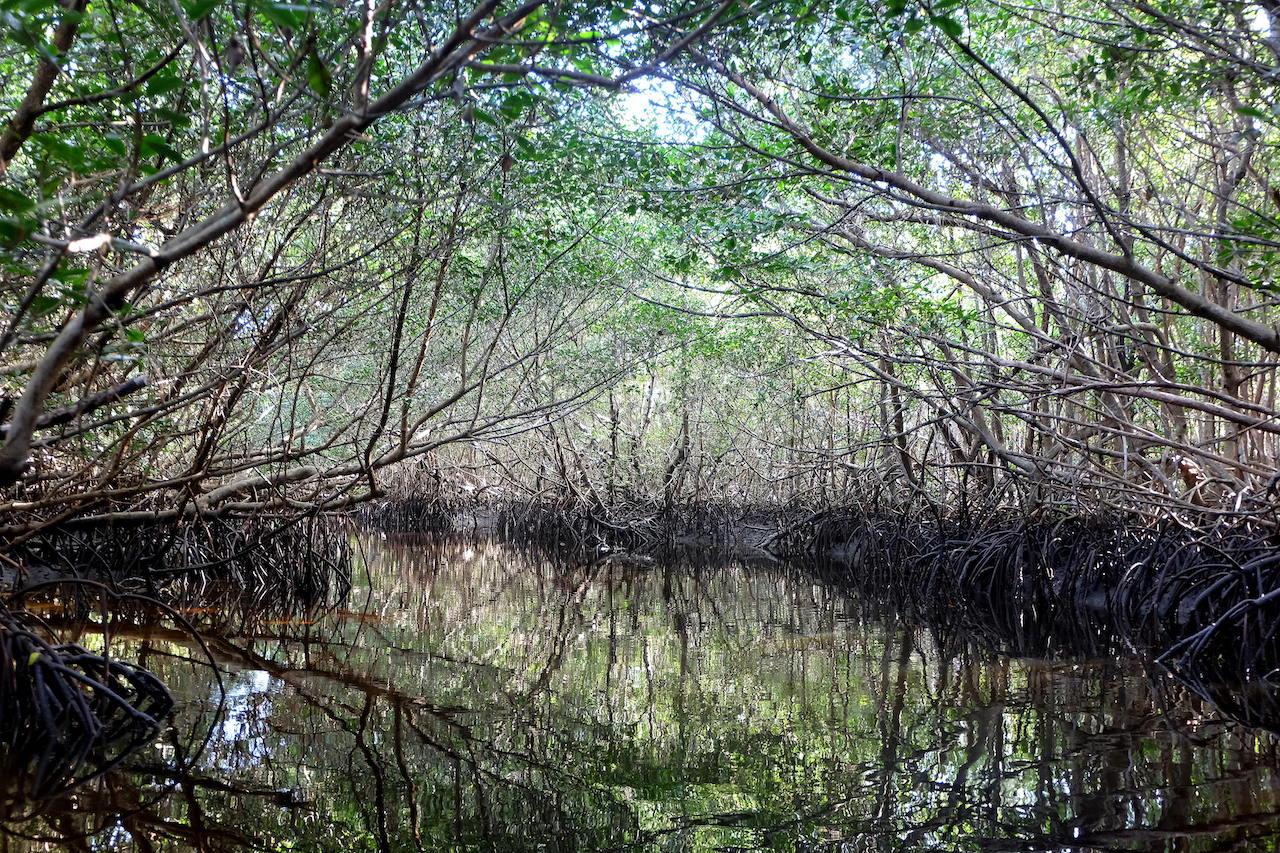 Balade en canoë dans les everglades