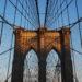 se cultiver à new york